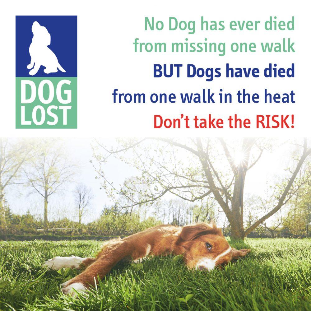 Walking Dogs In The Heat Warning