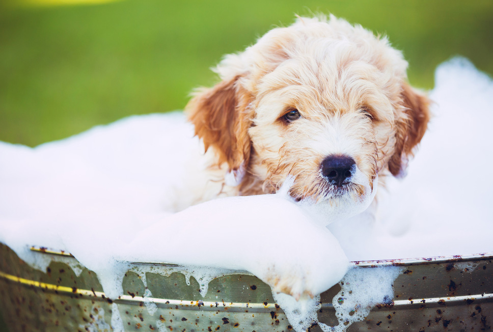 When to wash your Dog? When to give your Dog bath?