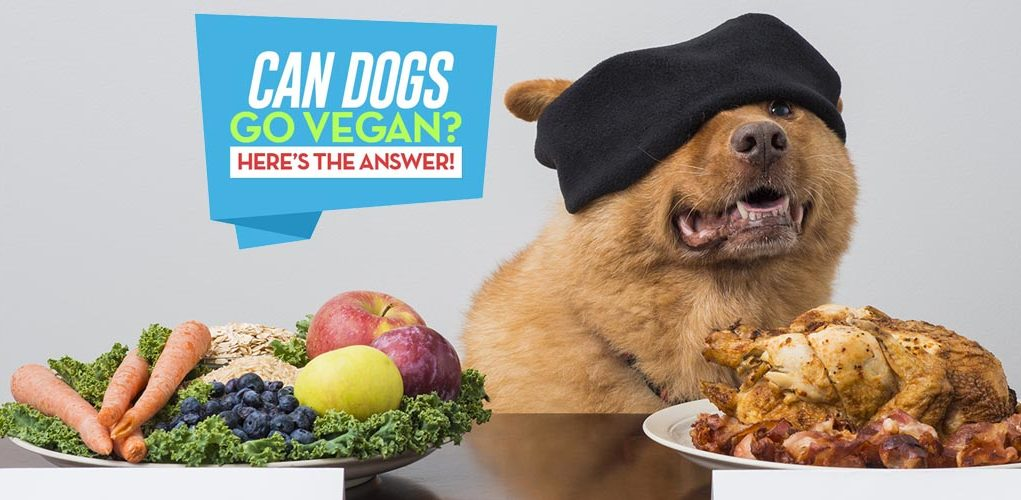Can Dogs Be Vegan Jaynes Blog